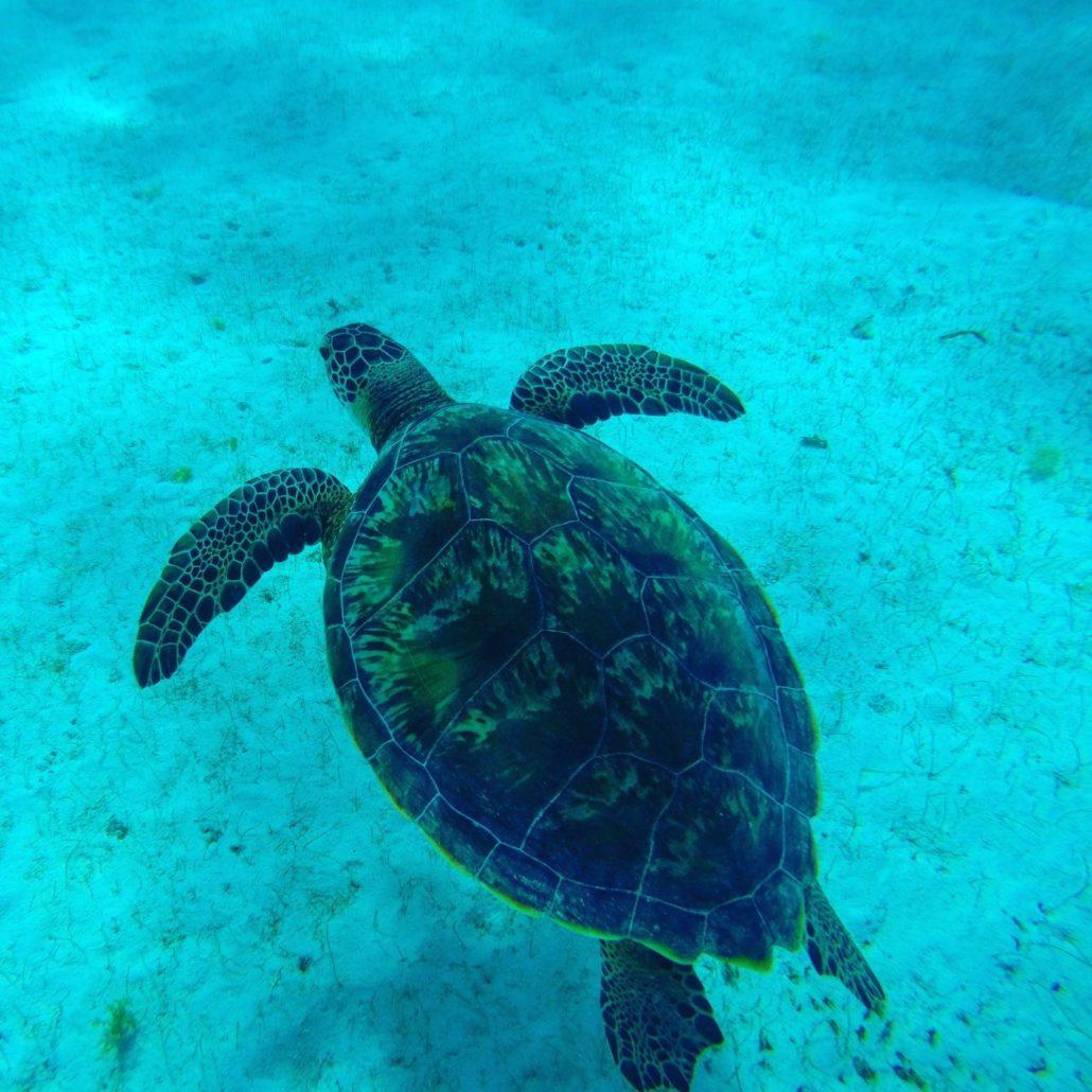 inverno ai caraibi barca a vela tartaruga