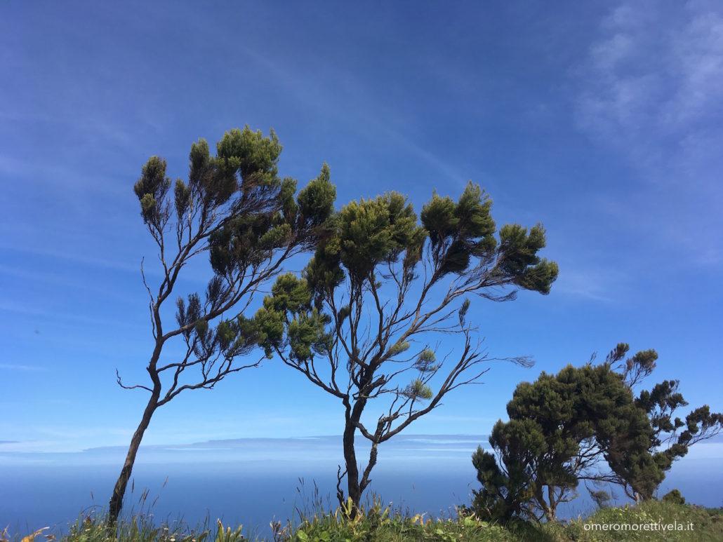 Sao Miguel alberi al vento