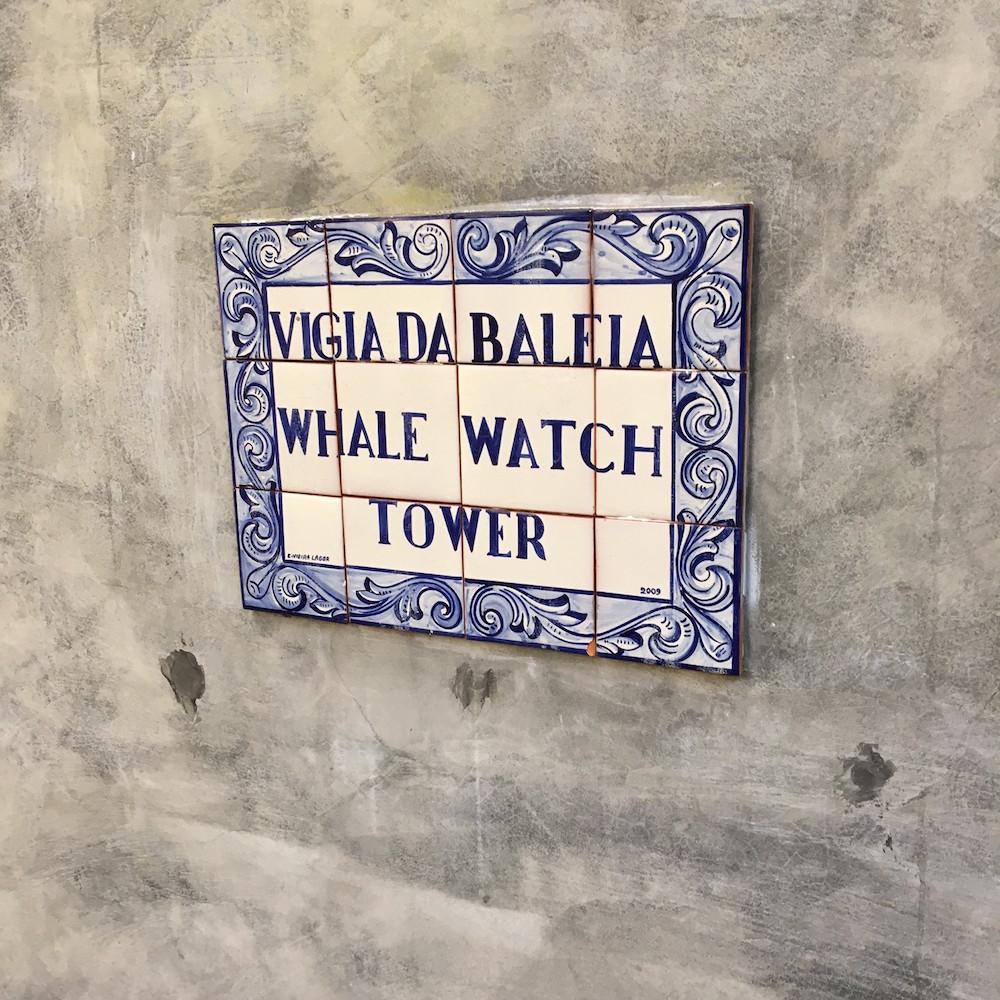 Sao Miguel avvistamento balene 2