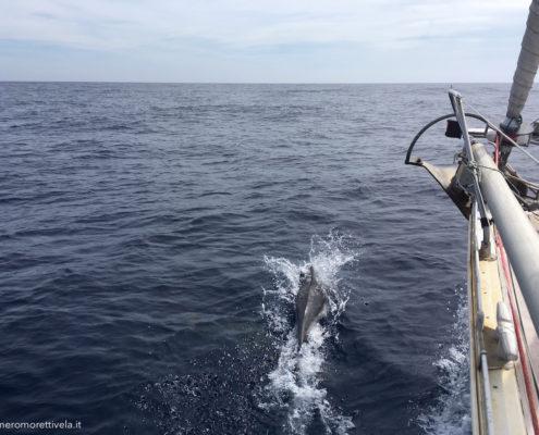 navigazione nel mare di alboran delfini
