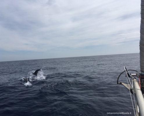 navigazione nel mare di alboran delfino