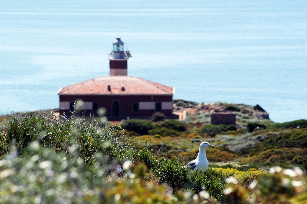 elba e corsica barca a vela isola di giannutri