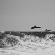 delfini libertà del mare